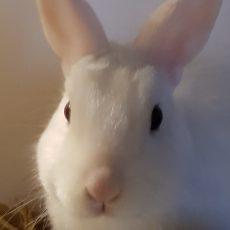Tibby