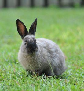 bunny-2997594_1920
