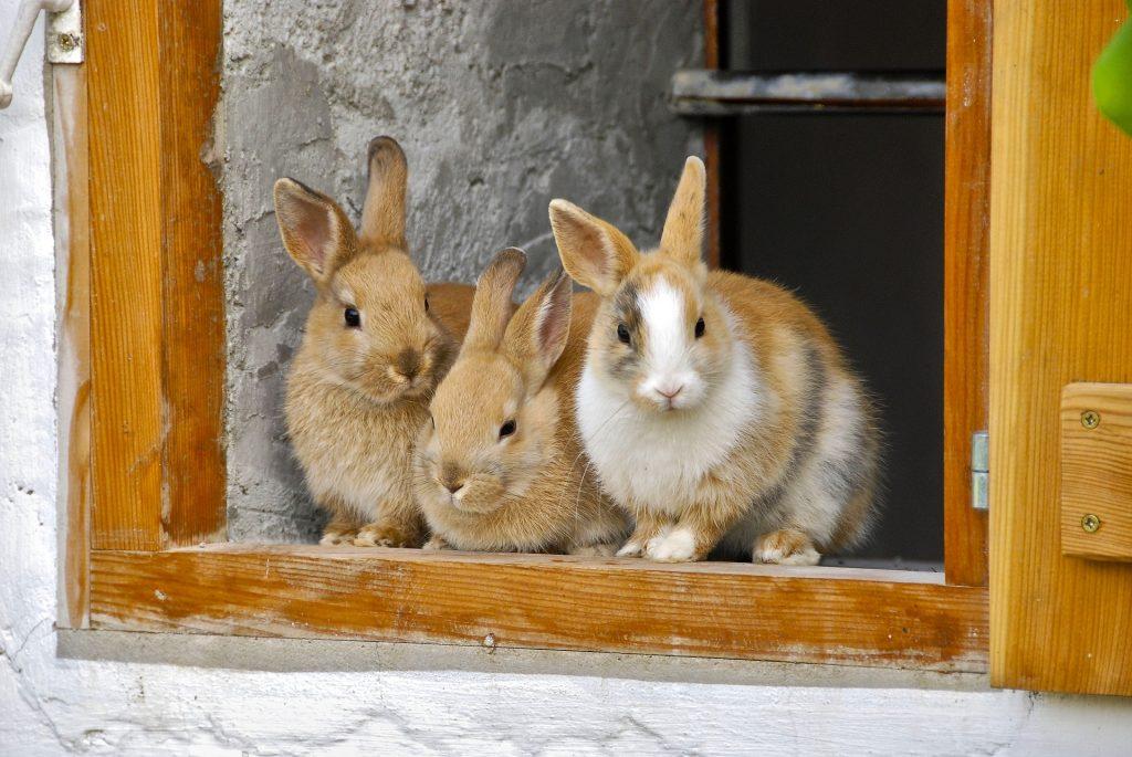 rabbit-2409186_1920