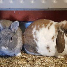 Silver en Jill
