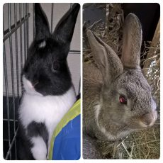 Kleintje en Bonnie