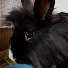 Woezel (binnen konijn)