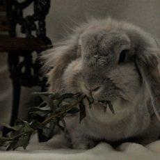 Johnny (binnen konijn)