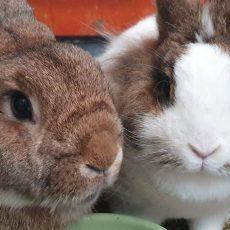 Arthur en Snoesje