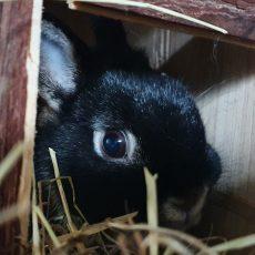 Bugsie