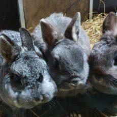Bailey, Jay en Maffie