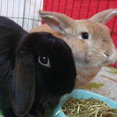 Moos en Romy (gesteriliseerd) (gereserveerd)
