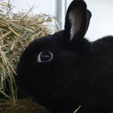 Jaron (binnen konijn)