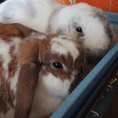 Theodore en Ginger