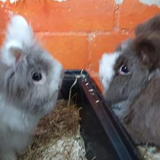 Lilo en Lola